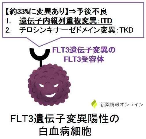 FLT3遺伝子変異の種類:ITDとTKD