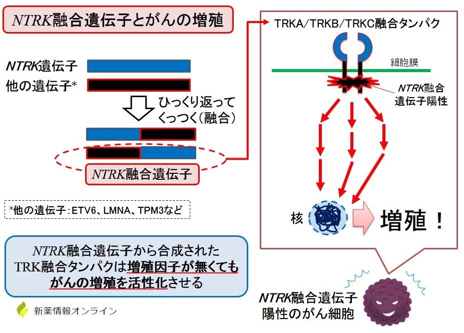 NTRK融合遺伝子とがんの増殖機構