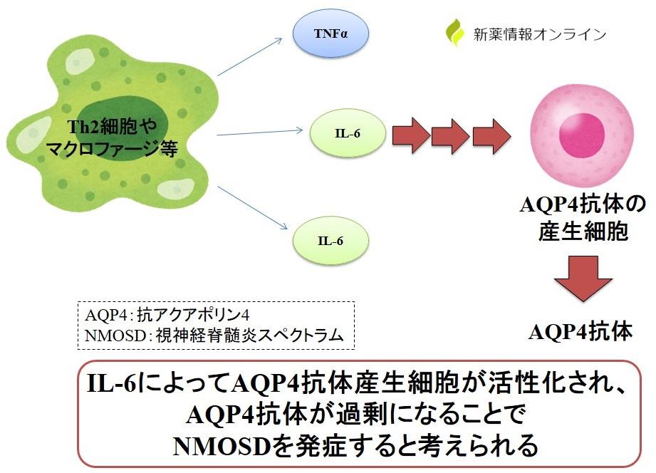 視神経脊髄炎スペクトラム(NMOSD)の原因:抗アポクリン4(AQP4)抗体による発症