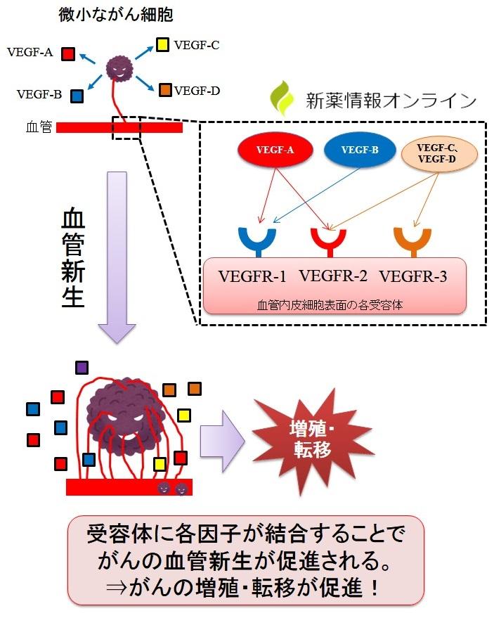 がんの血管新生と関連する因子、受容体:VEGFとVEGFR