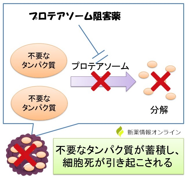 ニンラーロ(イキサゾミブ)の作用機序:プロテアソーム阻害薬