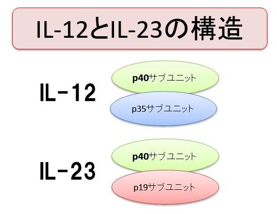 IL-12とIL-23の構造