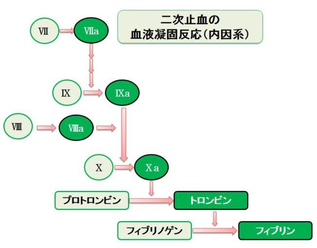 リクシアナ 腎 機能