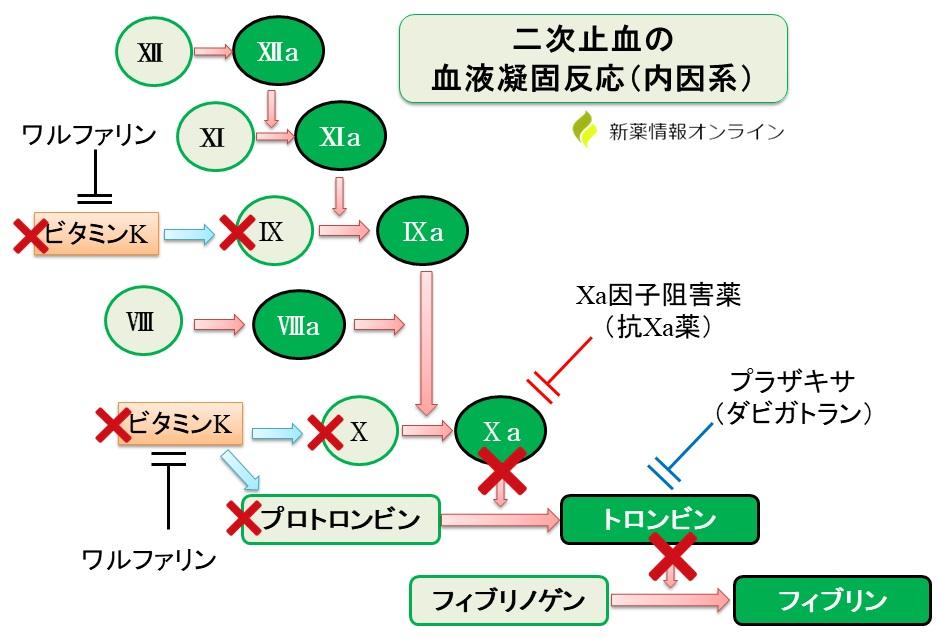 ワルファリンとDOACの作用機序のまとめ図