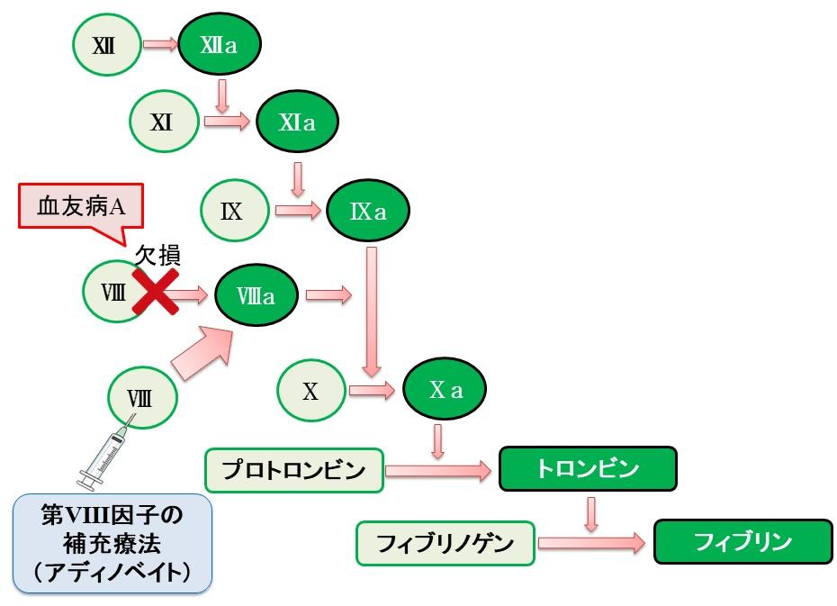 アディノベイト(一般名:ルリオクトコグ アルファ ペゴル)の構造と作用機序
