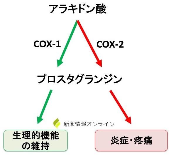 アラキドン酸カスケードとCOXの役割