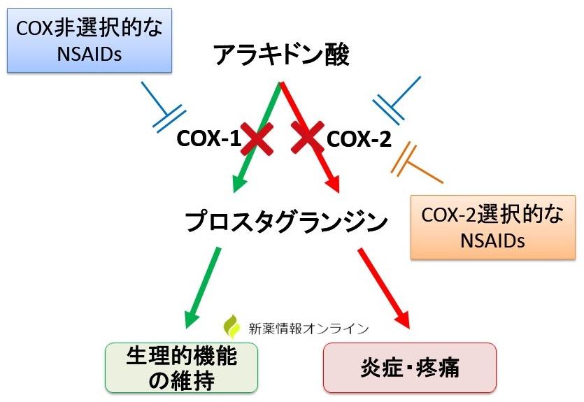 NSAIDsの作用機序とCOX-2選択的NSAIDsの作用点の違い