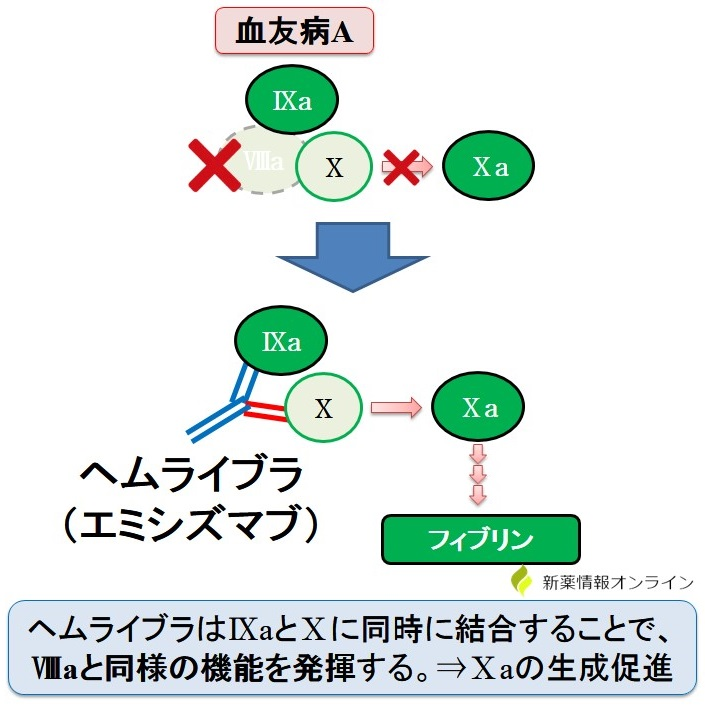 ヘムライブラ(エミシズマブ)の作用機序