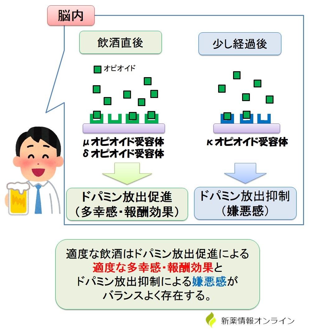 飲酒と各オピオイド受容体の働き