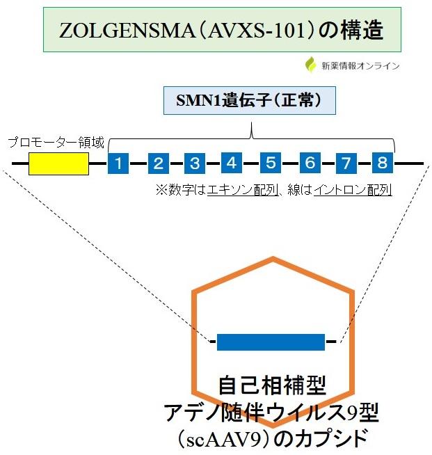 ゾルゲンスマ(AVXS-101)の構造:scAAV9