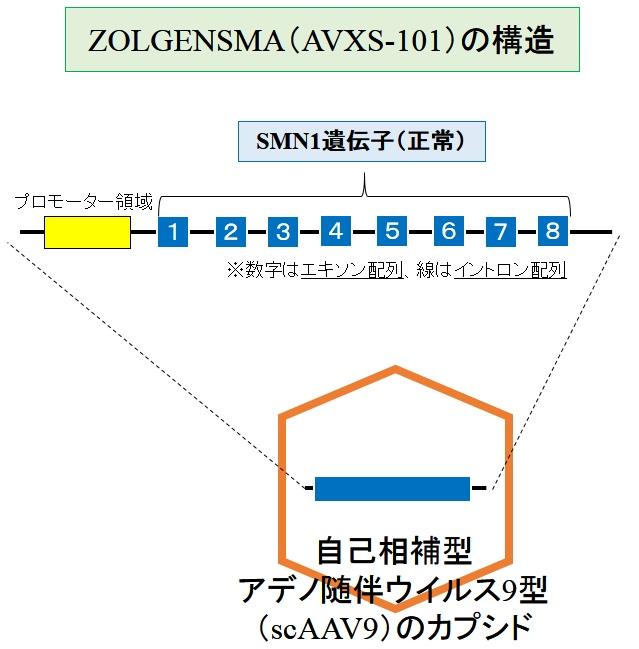 ZOLGENSMA(AVXS-101)の構造