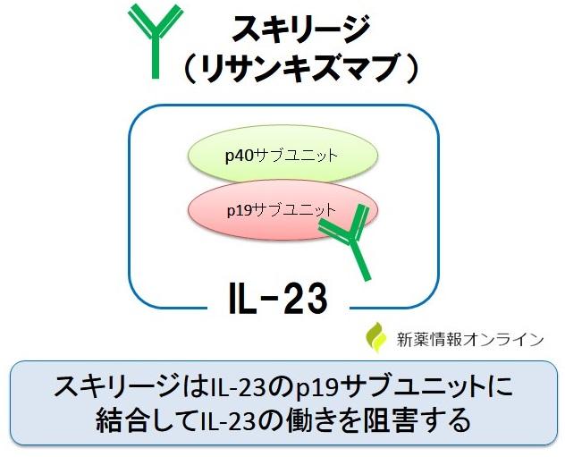 スキリージはIL-23のp19サブユニットを特異的に阻害する