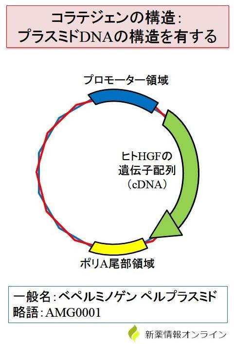 コラテジェンの構造(環状プラスミド)