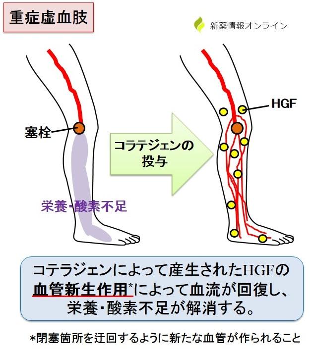 コラテジェンの作用機序(HGFの働き)