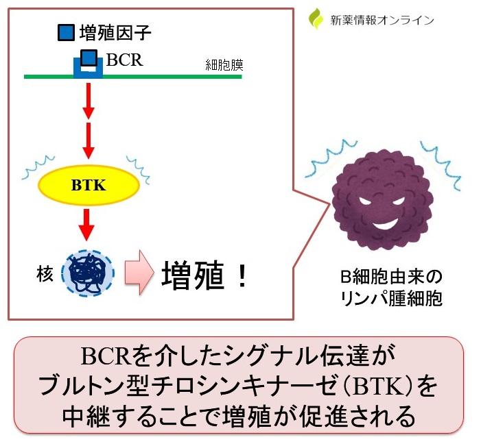 B細胞B細胞受容体(BCR)とブルトン型チロシンキナーゼ(BTK)
