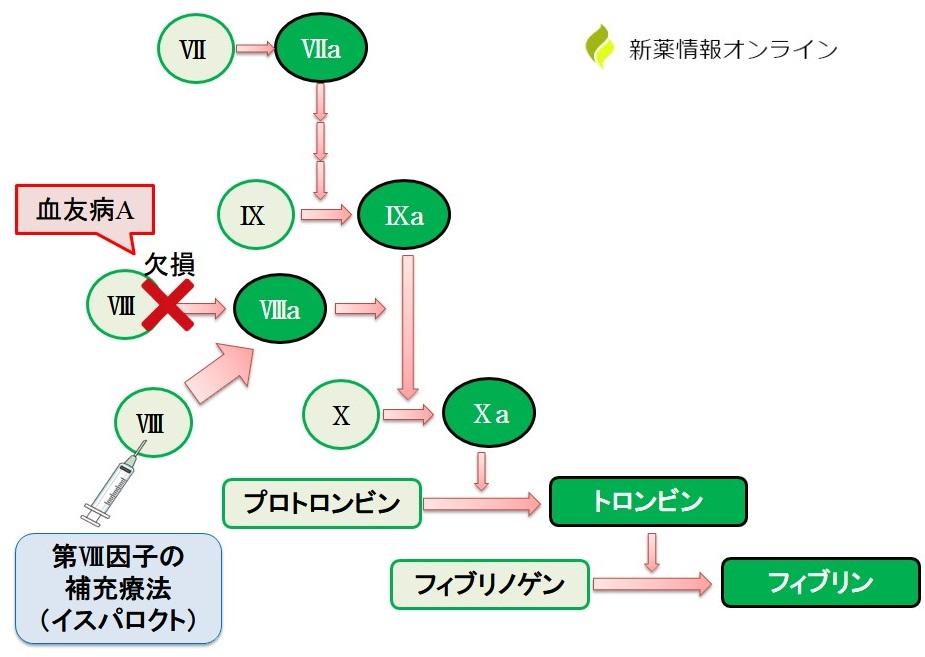 イスパロクト(ツロクトコグ アルファ ペゴル)の作用機序