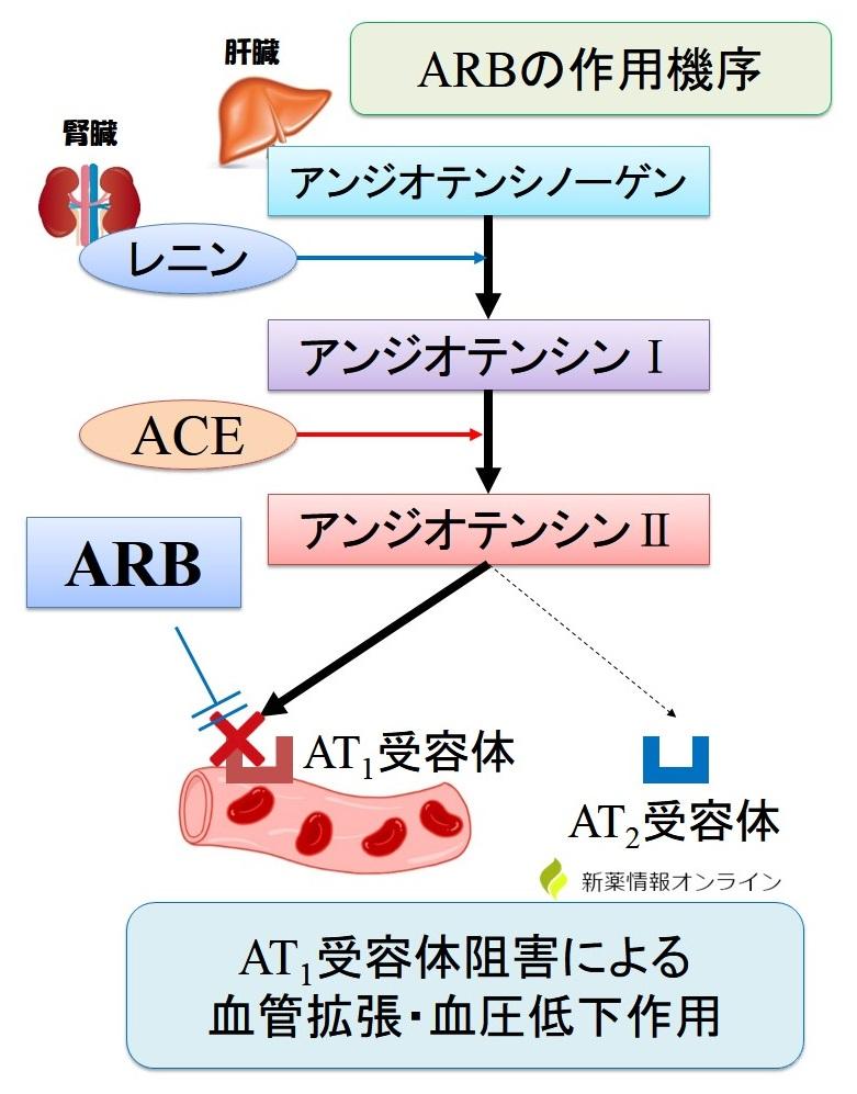 ARBの作用機序
