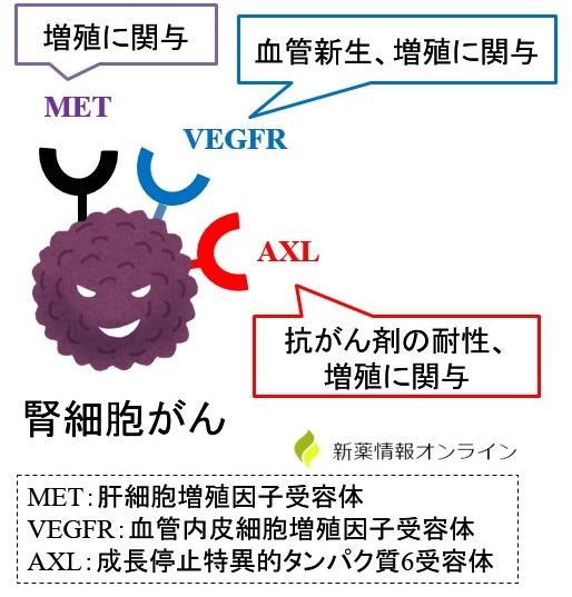 癌細胞の増殖とMET、VEGFR、AXLの働き