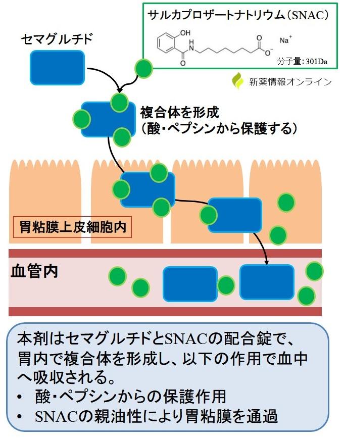 リベルサス(経口セマグルチド)の吸収メカニズム:サルカプロザートナトリウム(SNAC)による吸収促進