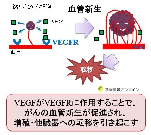 がんの血管新生とVEGFR
