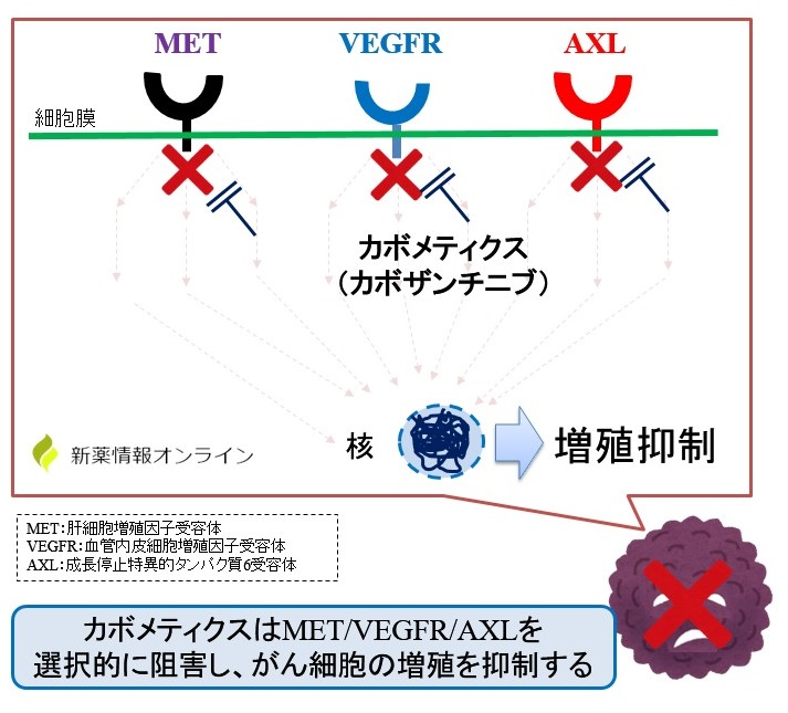 カボメティクス(カボザンチニブ)の作用機序:MET、VEGFR、AXL阻害による増殖抑制