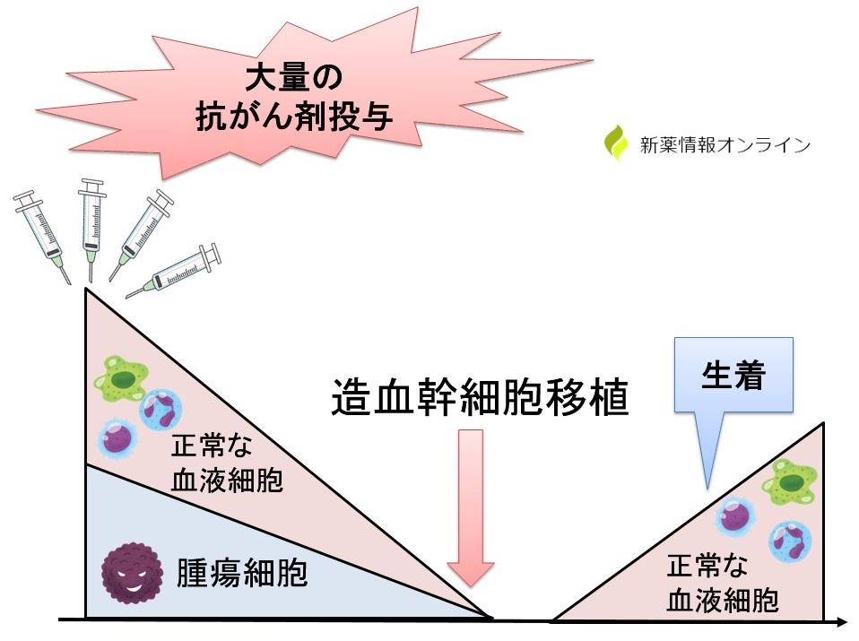 造血幹細胞移植の概要図