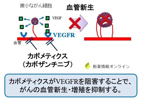 カボメティクス(カボザンチニブ)の作用機序:VEGFR阻害による血管新生阻害