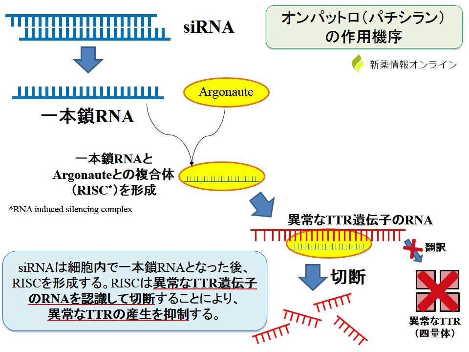 オンパットロ(パチラシン)の作用機序:RNA干渉とsiRNA