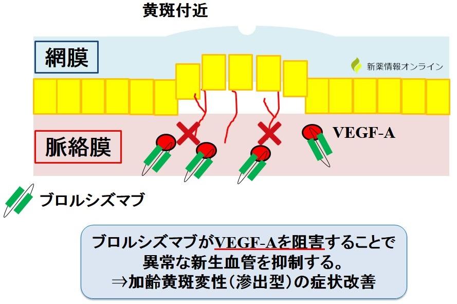 ブロルシズマブの作用機序:VEGF-Aを阻害するscFv製剤