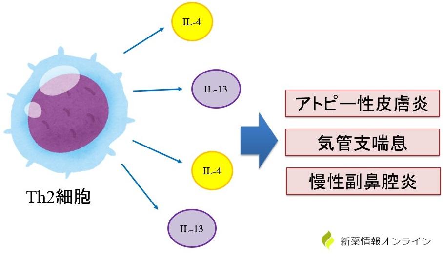 炎症の原因:Th2細胞によるアレルギー