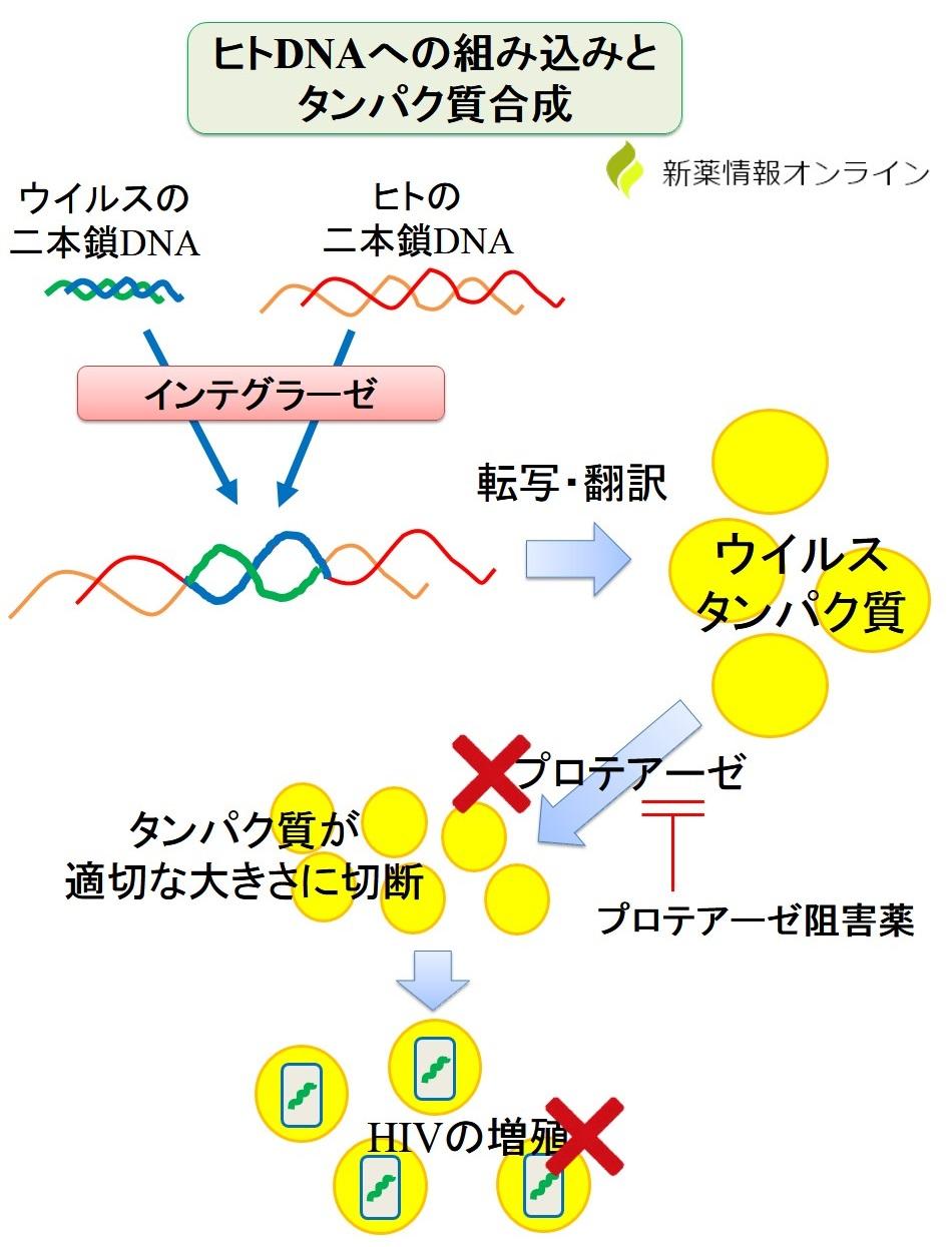 ダルナビル(DRV)の作用機序:プロテアーゼ阻害薬