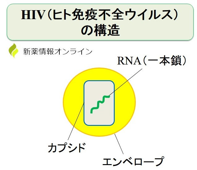 HIVの構造