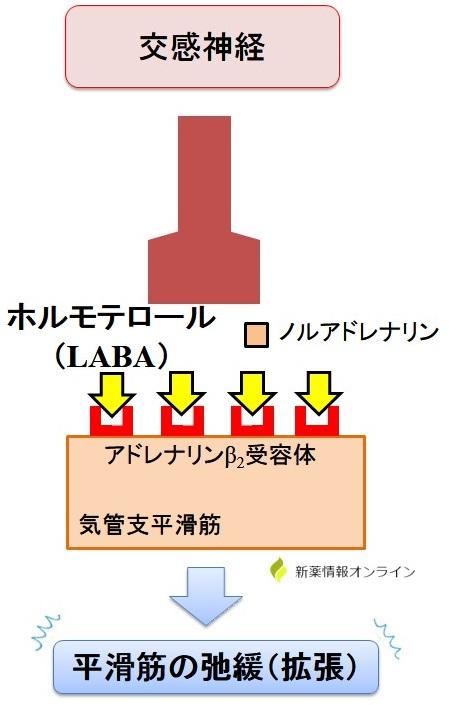 ビレーズトリの作用機序:ホルモテロール(LABA)