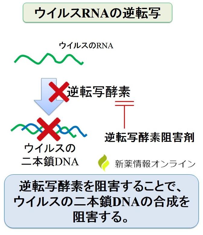 逆転写酵素阻害剤の作用機序