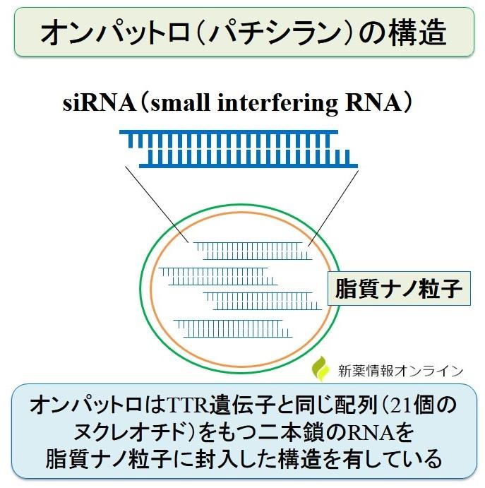 オンパットロ(パチラシン)の構造:siRNAを脂質ナノ粒子に封入