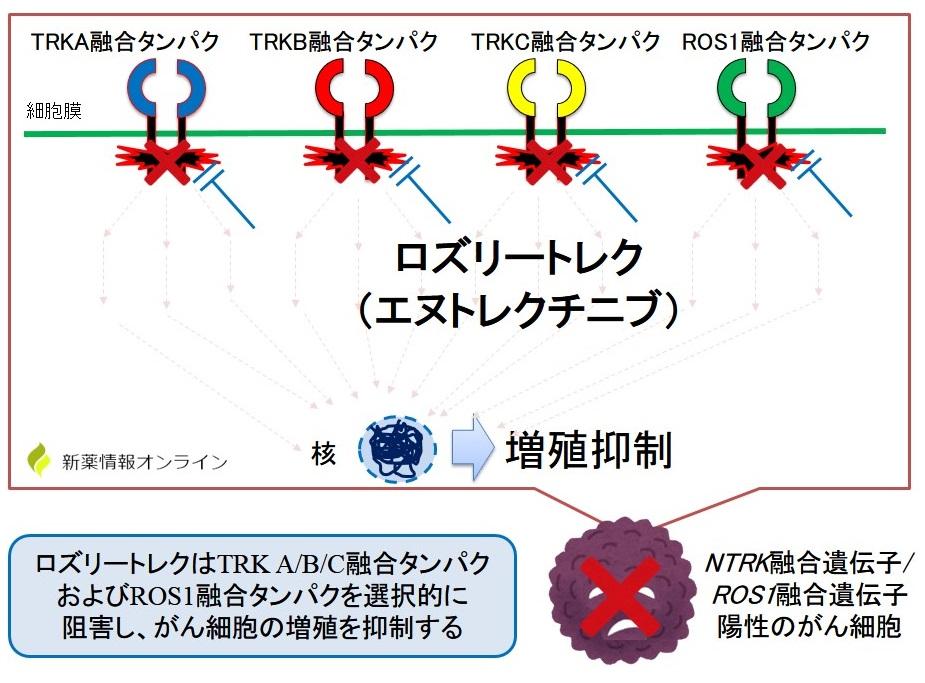 ロズリートレク(エヌトレクチニブ)の作用機序:TRK阻害とROS1阻害作用