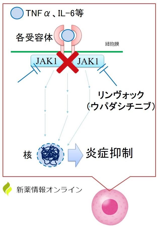 リンヴォック(ウパダシチニブ)の作用機序