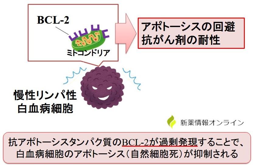 BCL-2によるアポトーシスの抑制:慢性リンパ性白血病(CLL)