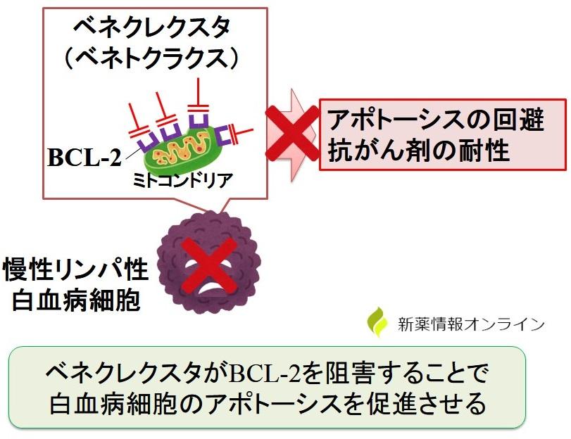 ベネクレクスタ(ベネトクラクス)の作用機序:BCL-2阻害薬