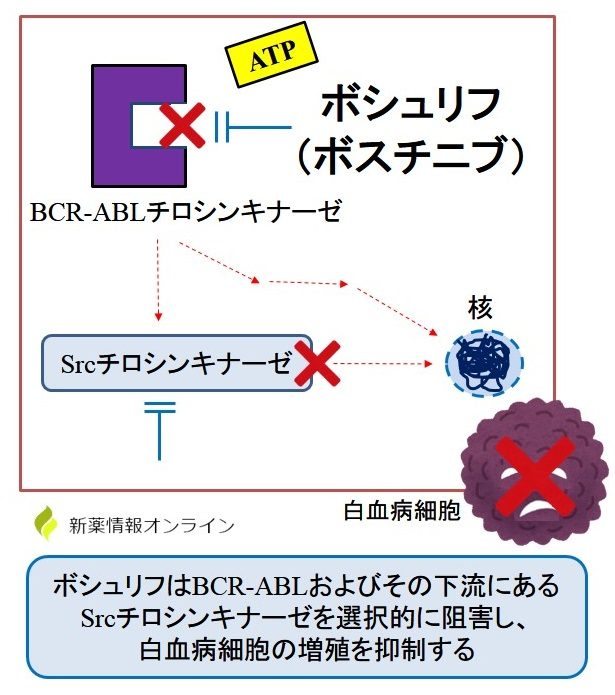 ボシュリフ(ボスチニブ)の作用機序:BCR-ABLチロシンキナーゼとSrcチロシンキナーゼの阻害