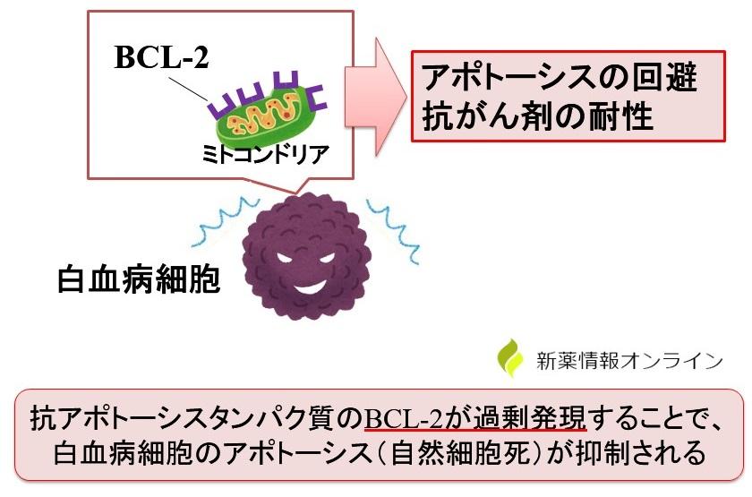BCL-2によるアポトーシスの抑制:慢性リンパ性白血病(CLL)/急性骨髄性白血病(AML)