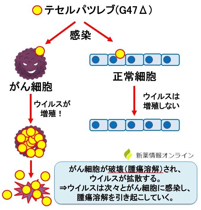 テセルパツレブ(G47Δ)の作用機序と特徴:腫瘍溶解性ウイルス