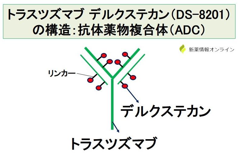 トラスツズマブ デルクステカン(DS-8201)の構造:抗体薬物複合体(ADC)