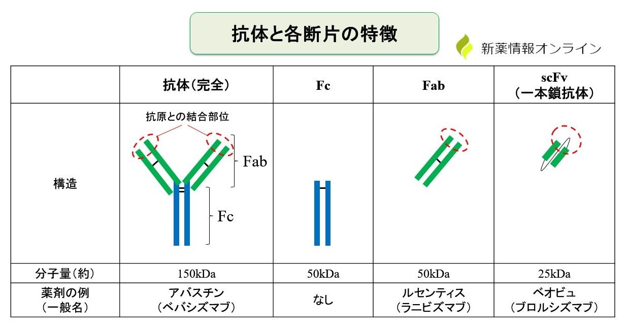 抗体と各断片(Fc、Fab、scFv)の特徴と違い:アバスチン、ルセンティス、ベオビュの比較