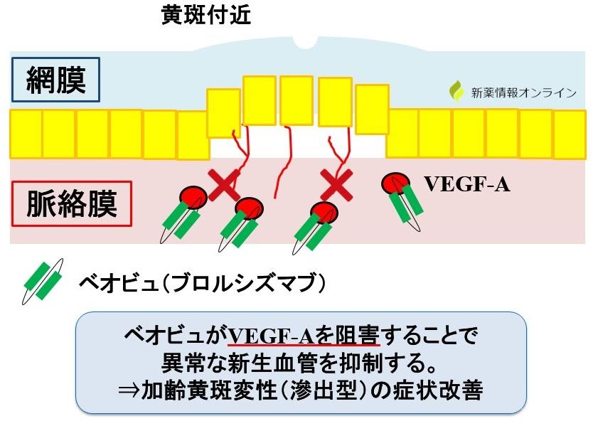 ベオビュ(ブロルシズマブ)の作用機序:VEGF-Aを阻害するscFv製剤