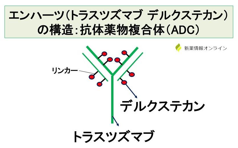 エンハーツ(トラスツズマブ デルクステカン:DS-8201)の構造:抗体薬物複合体(ADC)