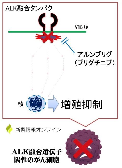 アルンブリグ(ブリグチニブ)の作用機序:ALKチロシンキナーゼ阻害