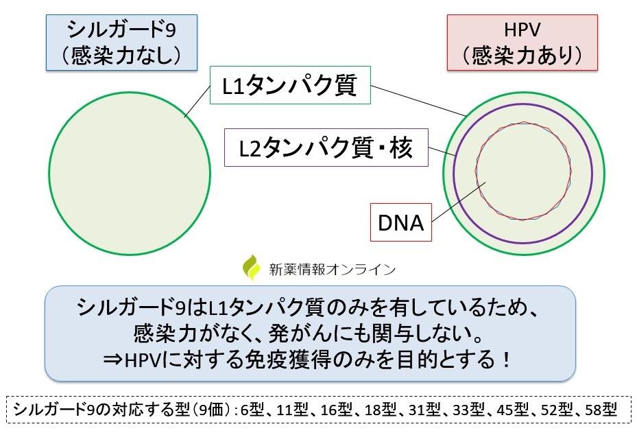 シルガード9の作用機序・特徴:L1タンパク質のみを有する(VLP)