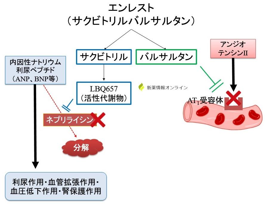 エンレスト(サクビトリルバルサルタン)の作用機序・特徴:ネプリライシン阻害とAT1受容体阻害
