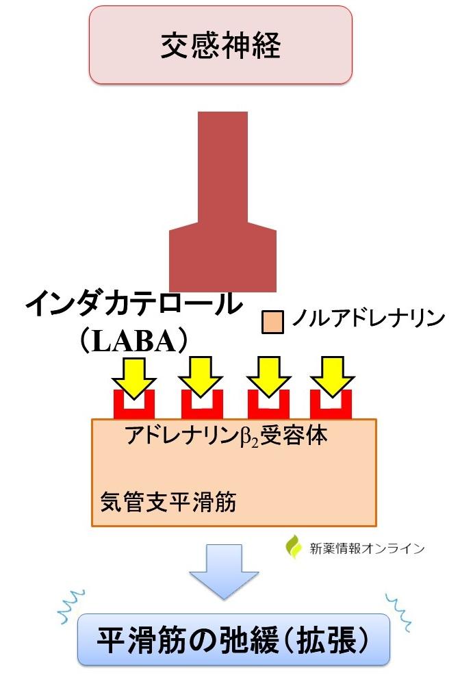 エナジアの作用機序:インダカテロール(LABA)